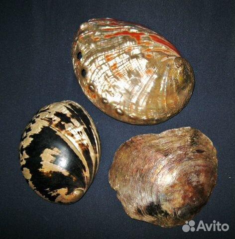 Морские перламутровые ракушки