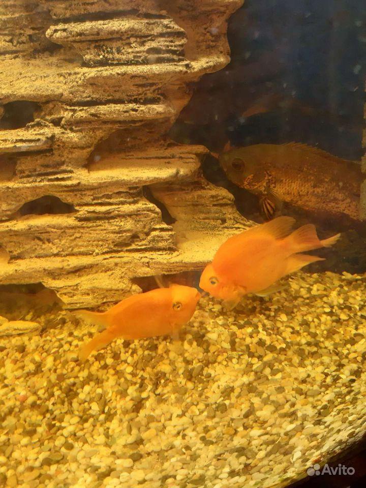 Рыбы купить на Зозу.ру - фотография № 1