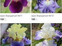 Оптовая база цветов г. смоленск, заказ букета для невесты одесса