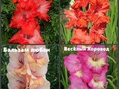 Авито.купить живые цветы оптом срез, г.ростов на дону купить кружево цвет пепел розы