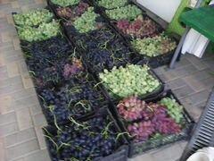 Саженцы: винограда,ежевики,малины