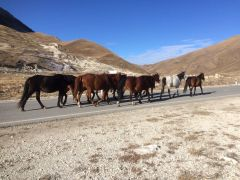 Лошади табун