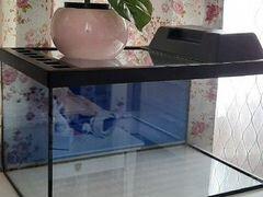 Новый аквариум - террариум 50л