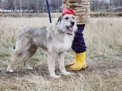 Добрая собака Тиша ждет своего хозяина