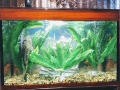 Большой аквариум с рыбками.Объем 260 л