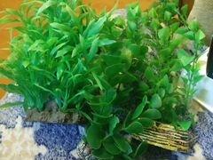 Растения и освещение для аквариума