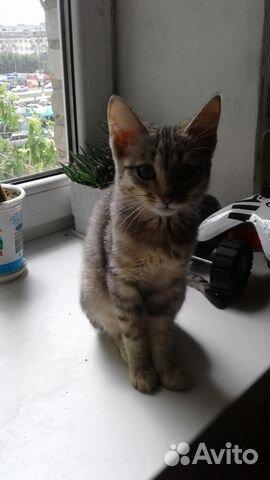 Объявление продать котенка бесплатно волгоград адреса сайтов вакансий на работу в г.желе