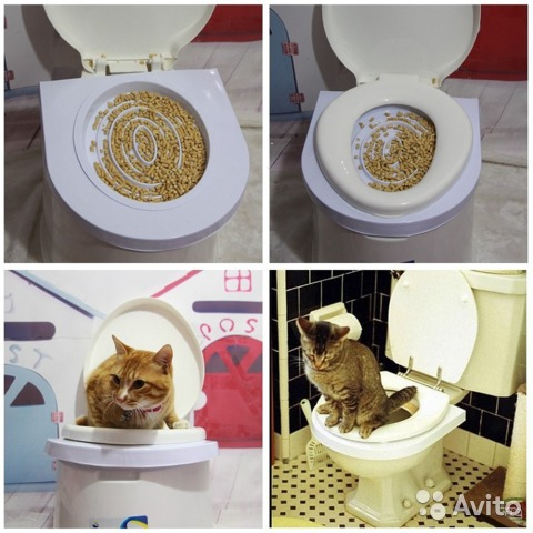 Туалет - Обучение купить 1