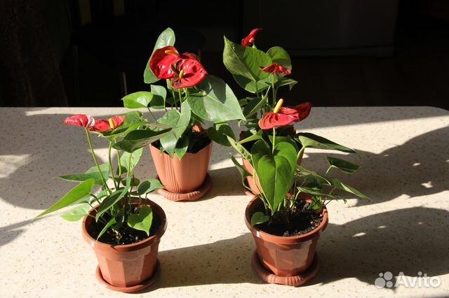 В вологде цветы купить комнатные купить цветы оптом дешево в москве ювао