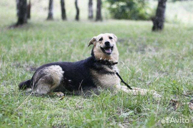 Улыбчивая собака Шелли в добрые руки купить на Зозу.ру - фотография № 10