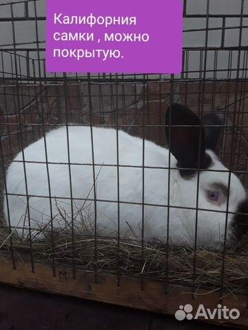 Кролики 89202417955 купить 9