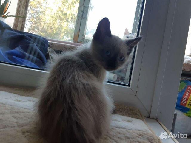 Котенок 2 месяца  купить 2