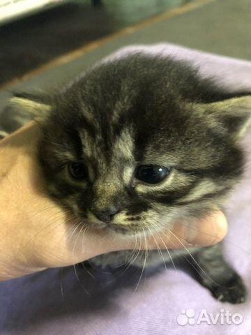 Котятки  89109732623 купить 2
