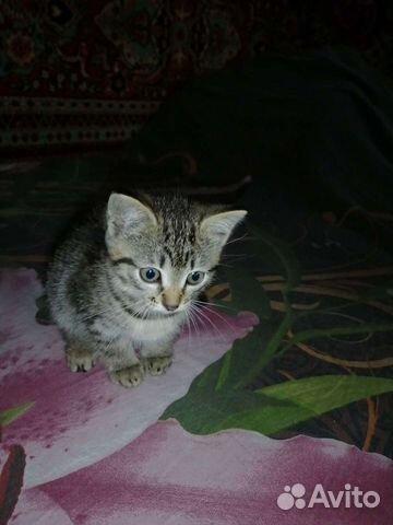 Отдадим котенка в хорошие руки  89515875711 купить 2