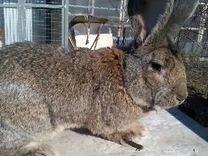 Индоутки и кролики