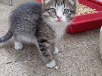 Котенок- девочка в добрые руки