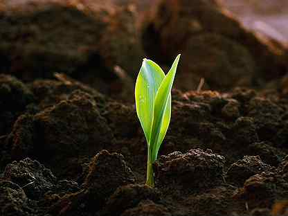 Растительный грунт от 1 тонны