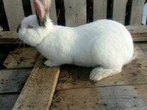 Мясо кролика лпх