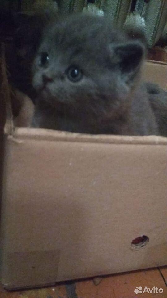 Кошки  89136104151 купить 4