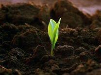 Земля плодородная, грунт, торф