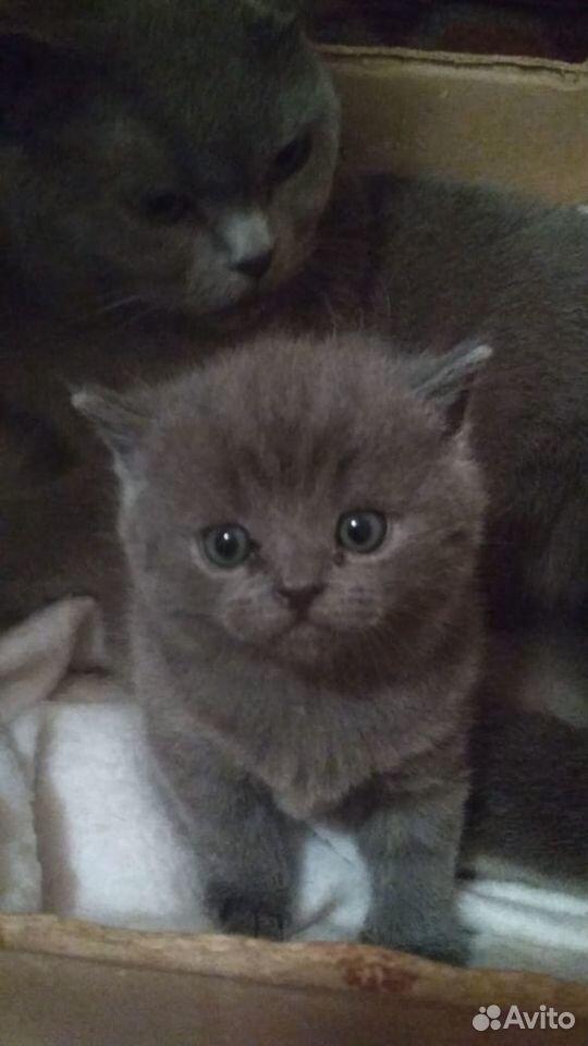 Кошки  89136104151 купить 2