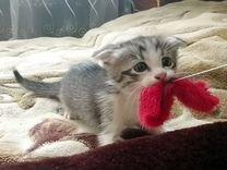 """""""Пасхальные"""" котята"""