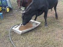 Корова 1,5 годолавые,стелиные,за ценой в личку или